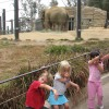 Kids Activities - Zoo Fieldtrip